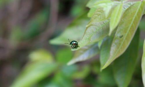 Photo of Scopriamo il piretro, una pianta che è anche un insetticida naturale perfetto per l'orto biologico