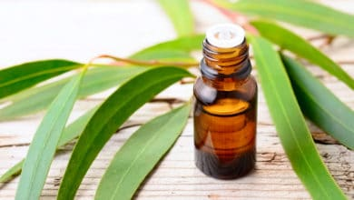 Photo of Scopriamo benefici, proprietà, effetti collaterali ed utilizzi dell'olio essenziale di eucalipto