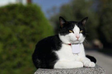 Usare un collare gps per gatti per monitorarne i movimenti, aumentando la sicurezza: ecco come sceglierlo