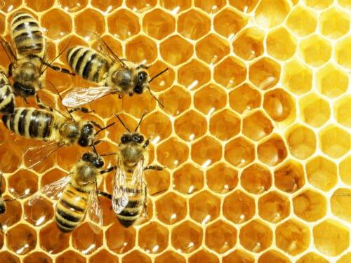 allontanare le api