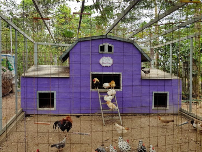 Come costruire un pollaio