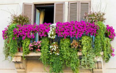 Mini,guida ai fiori da balcone ad ogni tipo di balcone, i suoi