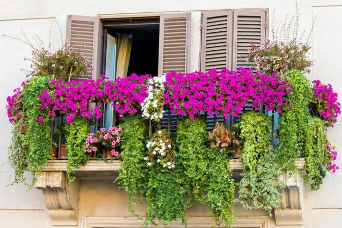 Mini-guida ai fiori da balcone: ad ogni tipo di balcone, i suoi fiori ideali!