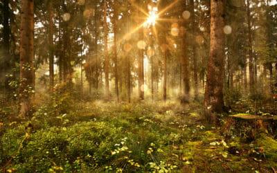 Alla scoperta del boschi certificati PEFC, i boschi gestiti in modo sano e sostenibile nel nostro Paese.