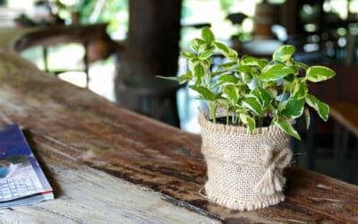 Pothos, una pianta verdissima facile da curare che tutti dovrebbero conoscere!