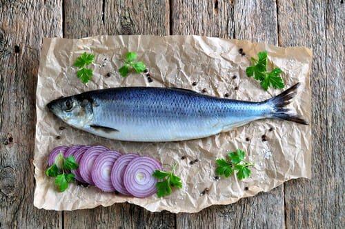 Pesce Azzurro Elenco Dei Pesci Azzurri E Delle Loro Qualità