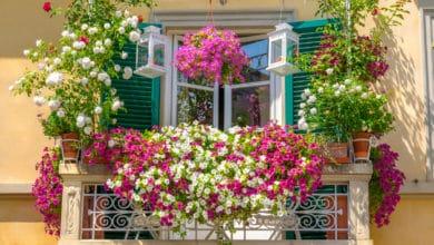 Photo of Quali fiori da balcone scegliere per un balcone fiorito e profumato