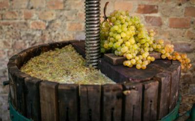 Mosto d'uva, lo conosci veramente? Ecco di segreti di questa bevanda e come si può usare