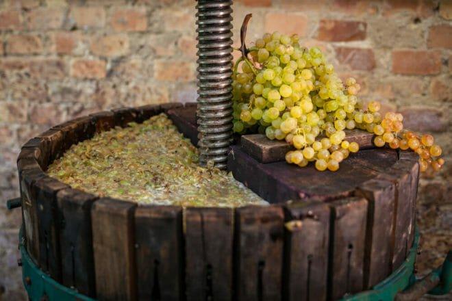 Photo of Mosto d'uva, lo conosci veramente? Ecco di segreti di questa bevanda e come si può usare