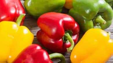Photo of Le migliori ricette con peperoni della nostra cucina