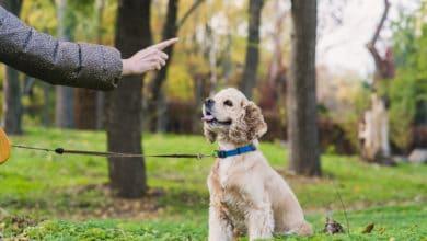 Photo of Mini-guida all'addestramento cani, con semplici esercizi di base e informazioni sugli sport da fare con il vostro amico peloso