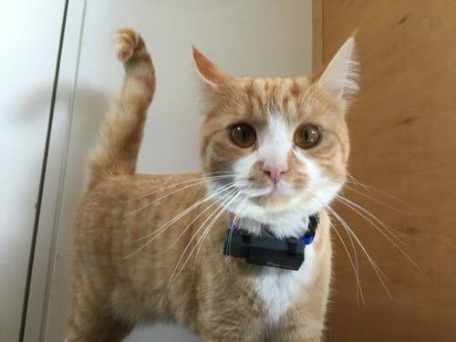 collare gps per gatti