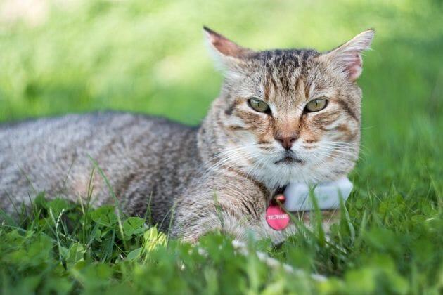 Photo of Usare un collare gps per gatti per monitorarne i movimenti, aumentando la sicurezza: ecco come sceglierlo