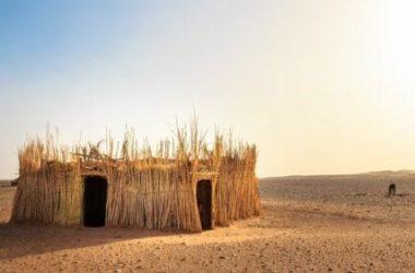 Tutto sulla paglia: come utilizzarla in edilizia ed in agricoltura
