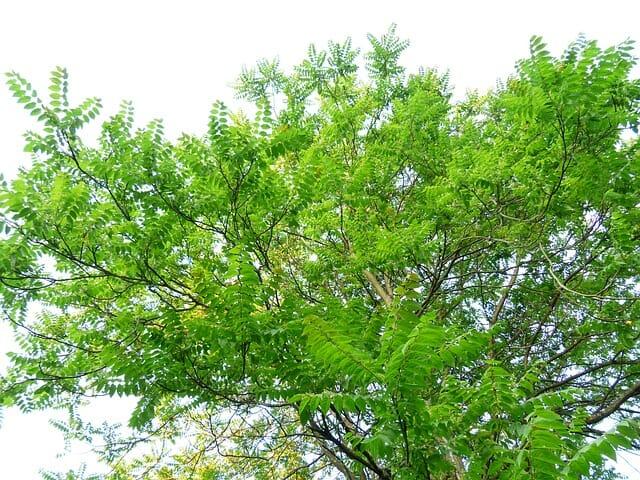 piante urticanti