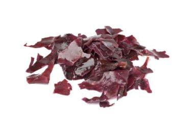 Tutto sull'alga dulse, un'alga ricca di proteine e vitamine che ricorda il sapore del bacon