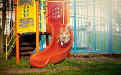 Il parco giochi per cani: una vera e propria Gardaland per il nostro amico a quattro zampe