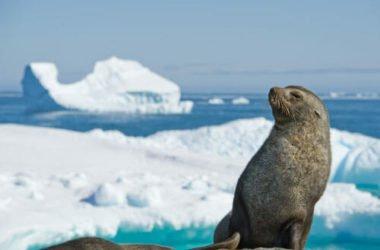 Quali sono i mammiferi marini? Elenco, immagini e curiosità