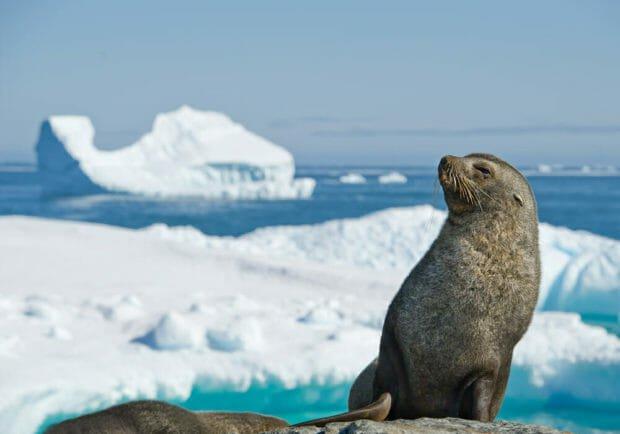 Photo of Quali sono i mammiferi marini? Elenco, immagini e curiosità