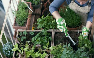 Come fare un orto sul terrazzo: partiamo con le piante più facili da ...