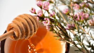 Photo of Non tutti i mieli sono uguali: il caso del miele di Manuka, un antibatterico naturale
