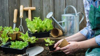 Photo of Scopri come coltivare insalata in casa con la nostra guida pratica