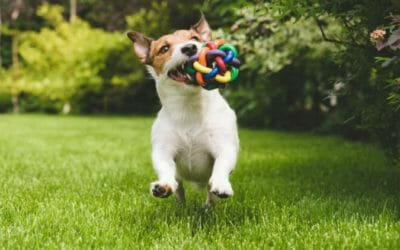 Guida al mondo dei giochi per cani: giochi di agility e intelligenza, fai da te e non
