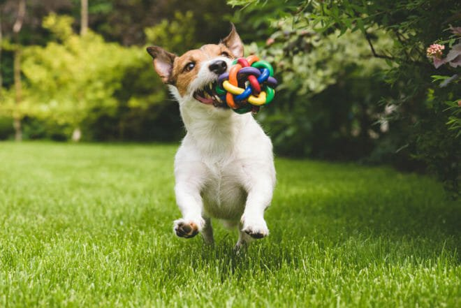 Photo of Guida al mondo dei giochi per cani: giochi di agility e intelligenza, fai da te e non