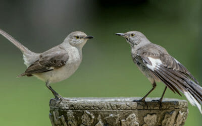 Birdwatching: consigli per praticare l'osservazione degli uccelli e come riconoscerli