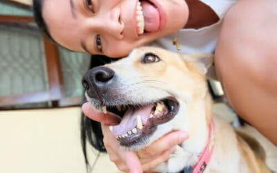 La guida per pulire i denti al cane in modo naturale ed efficace