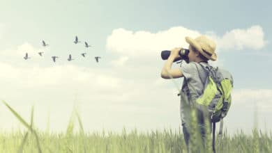 Photo of Birdwatching: consigli per praticare l'osservazione degli uccelli e come riconoscerli