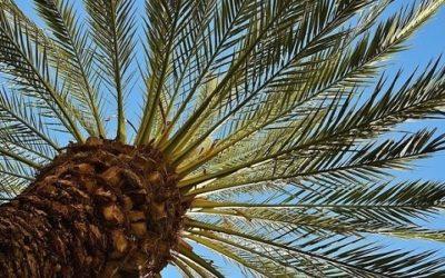 Guida alla palma da giardino, una delle piante ornamentali più apprezzate