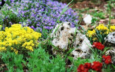 Giardino roccioso: come si realizza e con quali piante e materiali