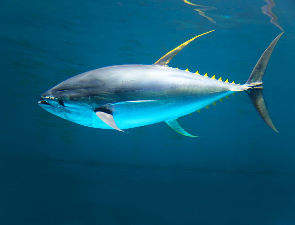 Photo of Le 4 cose non proprio eco-sostenibili del tonno in scatola
