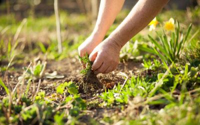 Piante infestanti e terreno: ecco alcune piante che ci dicono molto del nostro giardino