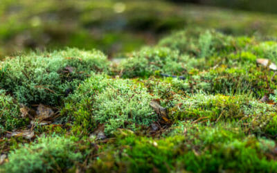 Il muschio: prezioso micro-ecosistema da salvaguardare