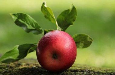 Mela: tante notizie, informazioni e curiosità su questo frutto
