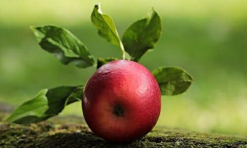 Photo of Mela: tante notizie, informazioni e curiosità su questo frutto