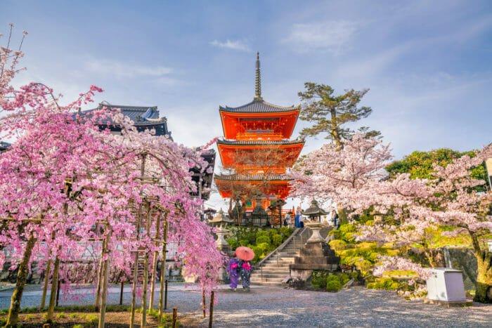 fiori di ciliegio kyoto