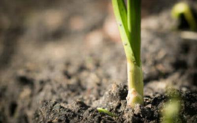 Scopriamo come far crescere una pianta da uno scarto alimentare: nuova vita per gli avanzi