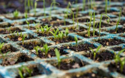 Un semenzaio fai-da-te, un alleato molto utile per chi cura l'orto