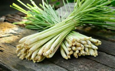 Lemongrass: un'erba usata soprattutto nella cucina thai