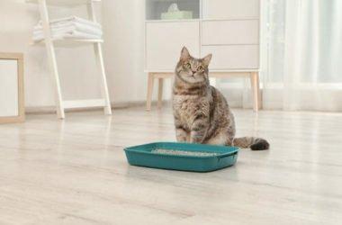 Come scegliere la lettiera per gatti più idonea: tutti i consigli utili