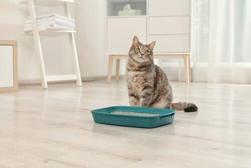 Photo of Come scegliere la lettiera per gatti più idonea: tutti i consigli utili