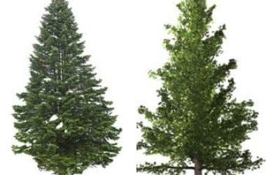 Simbolo di resistenza e longevità, il pino è un albero sempreverde con diverse proprietà curative