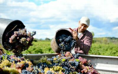 A cosa servono i solfiti nel vino e perché nel biologico si cerca di farne a meno