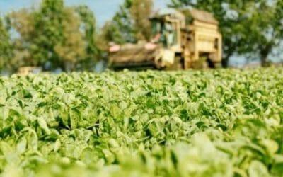 Dal campo alla tavola: da Findus l'impegno per un'agricoltura buona e sostenibile