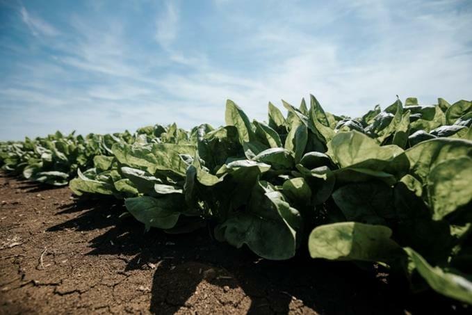 Photo of Dal campo alla tavola: da Findus l'impegno per un'agricoltura buona e sostenibile