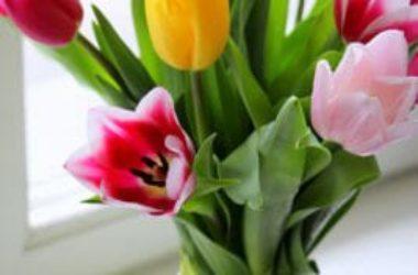 Come scegliere i fiori per compleanno? La guida per tutte le occasioni!