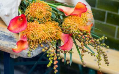 Fiori arancioni: sono perfetti per il giardino e per decorare la casa in autunno